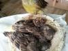 Przegląd gniazda - pod nadzorem